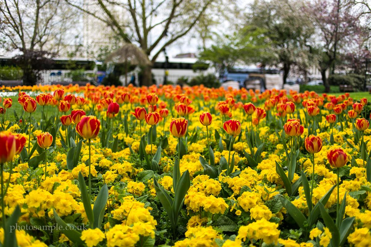 IMAGE: http://photosample.co.uk/wp-content/uploads/2013/04/photolondon-5.jpg