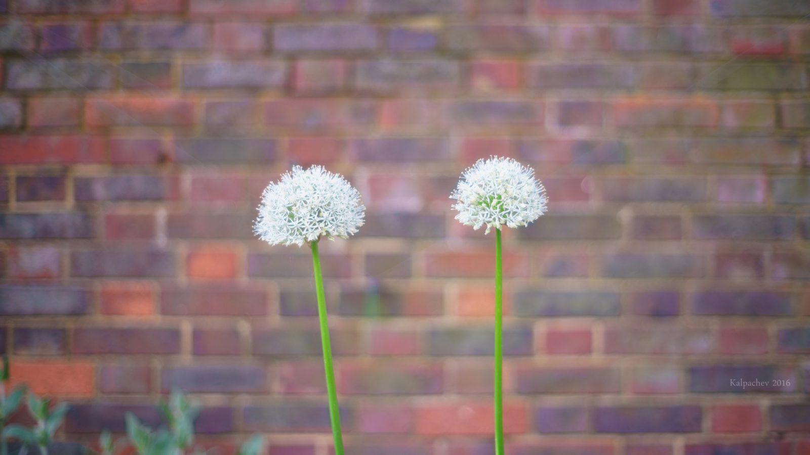 Holland Park London, UK
