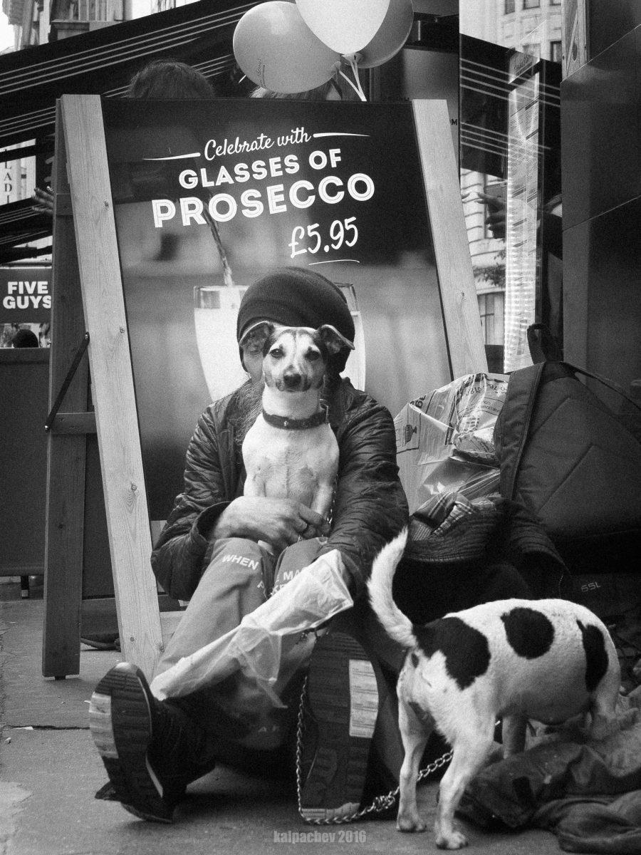 dog's life London