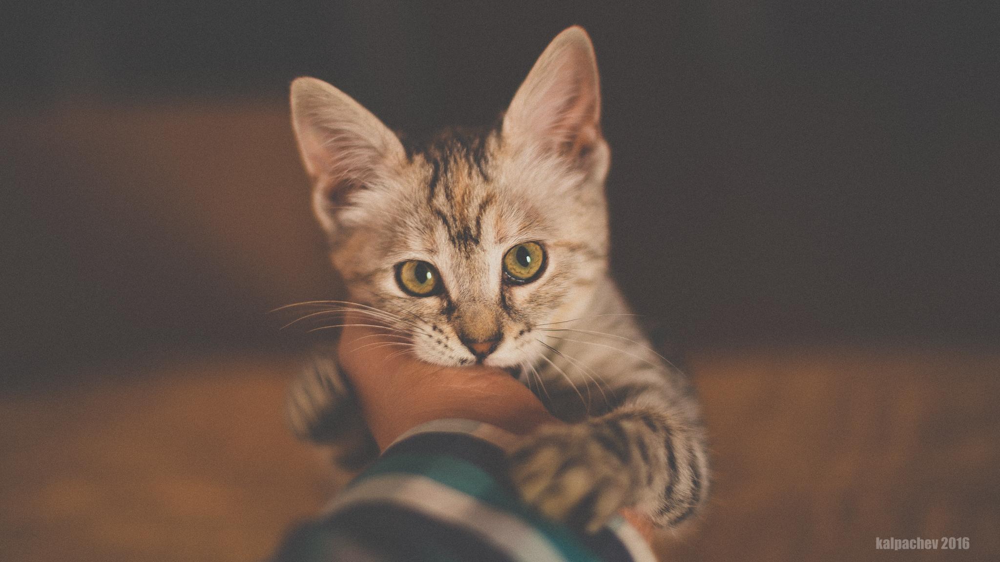 My new model #cat #animal