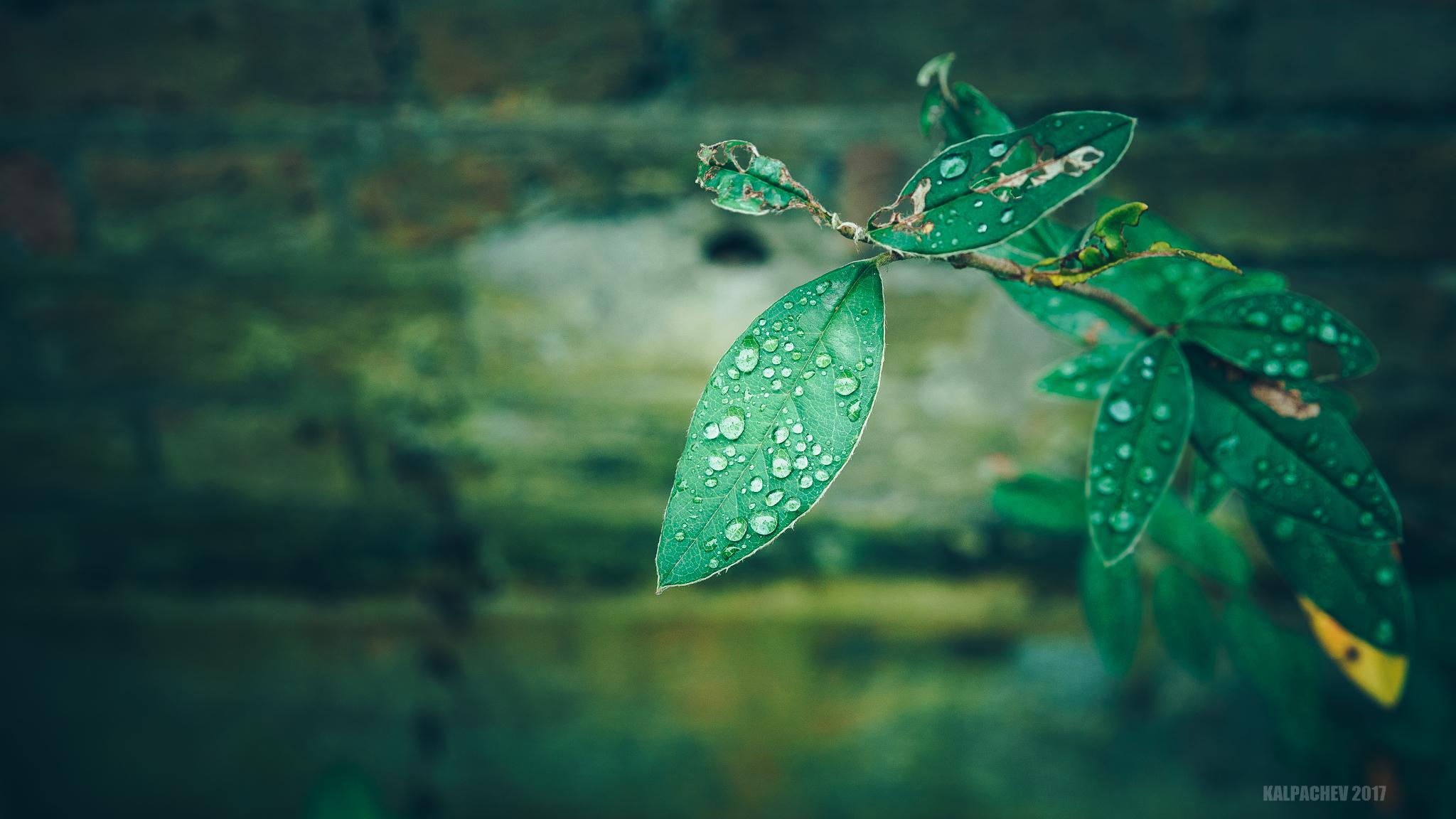 24mm Green