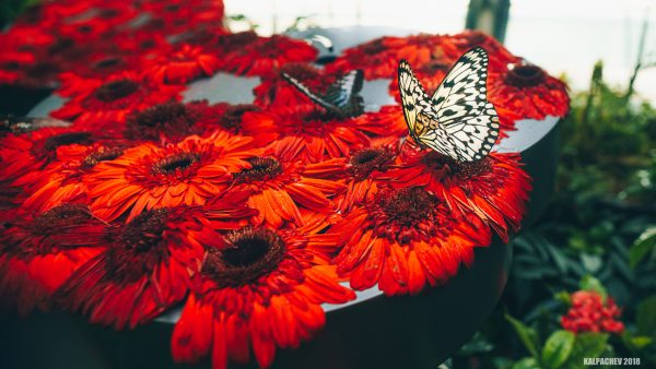 The Butterfly garden at Changi airport Singapore