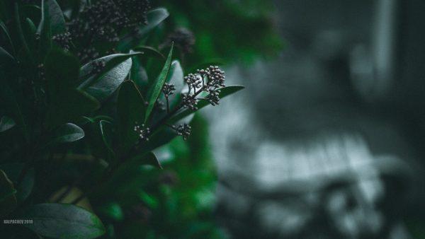 – Dark Green –