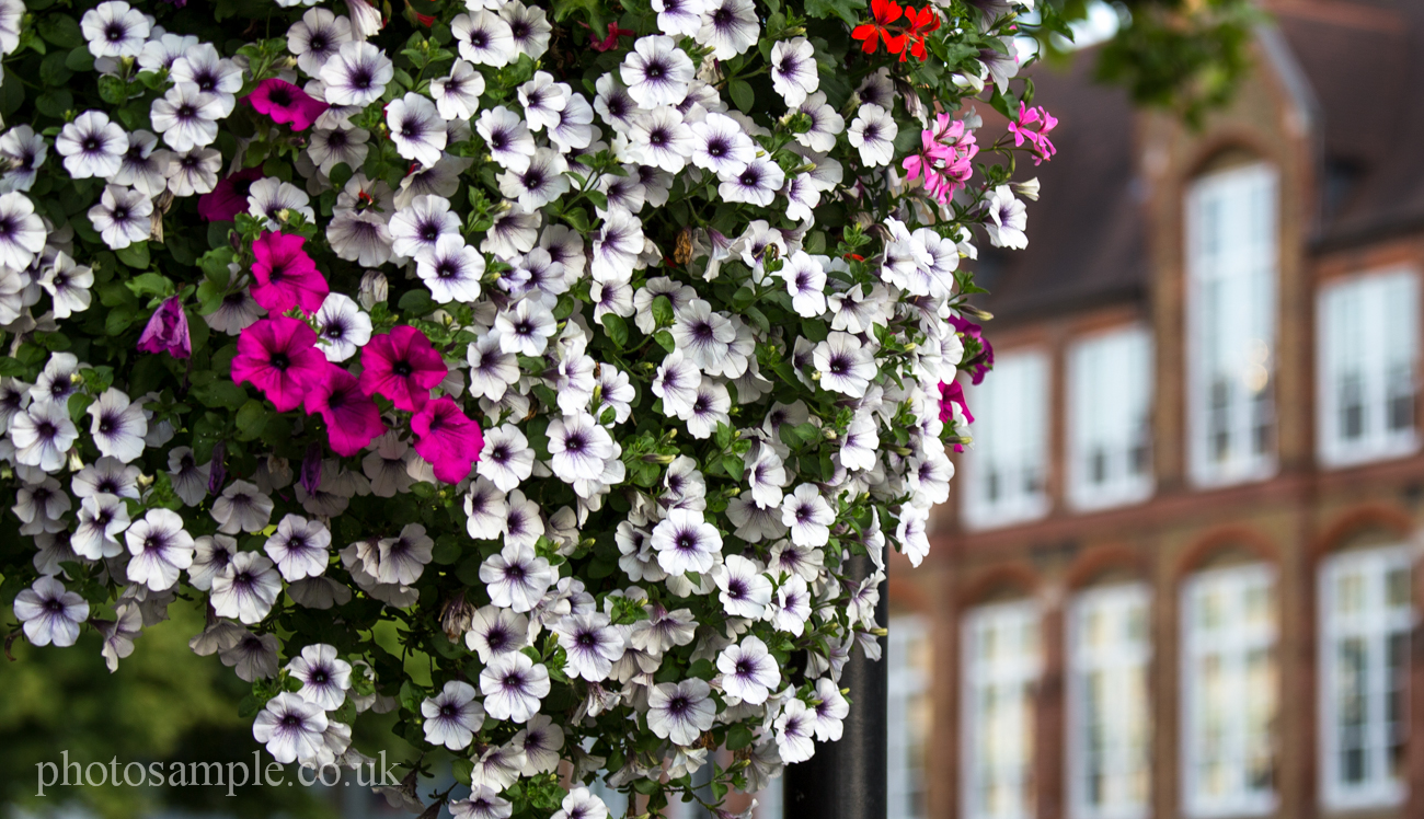 Flowers – Photos from London